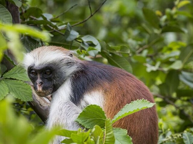 Opička v jozani parku