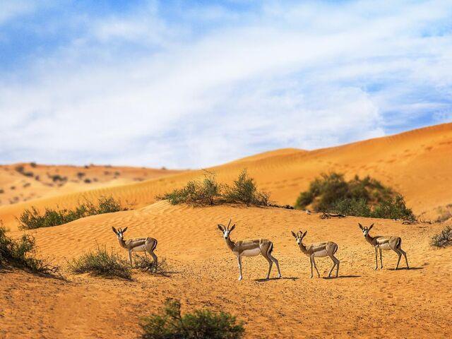 Zvieratá na púšti