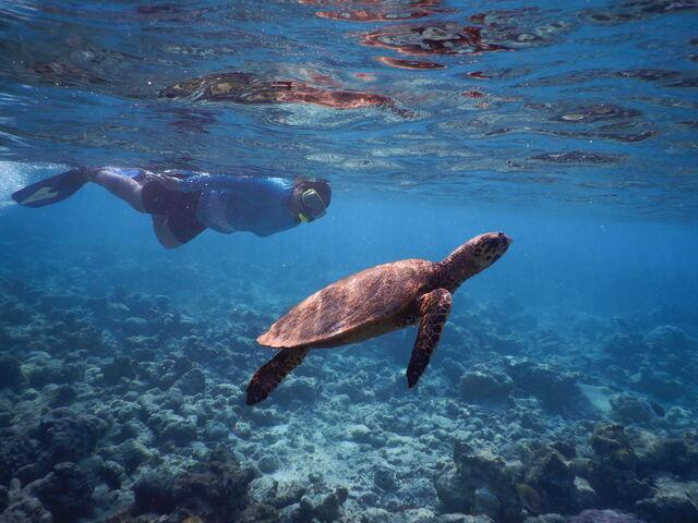 Šnorchlovanie na maldivách