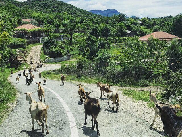 Kozy v národnom parku v albánsku