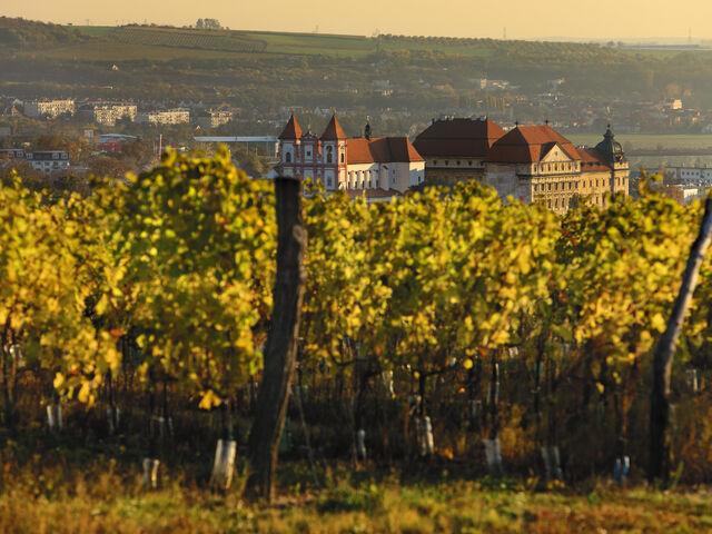 Česko - vínna cesta