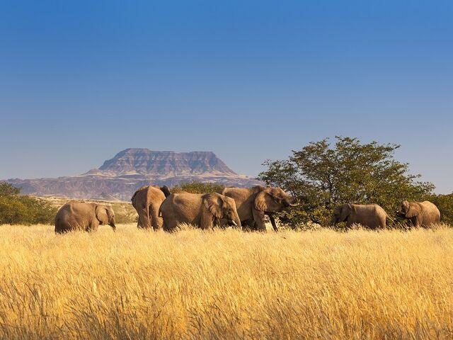 Národný park so slonmi v namíbii