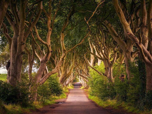 Stromoradie v írsku
