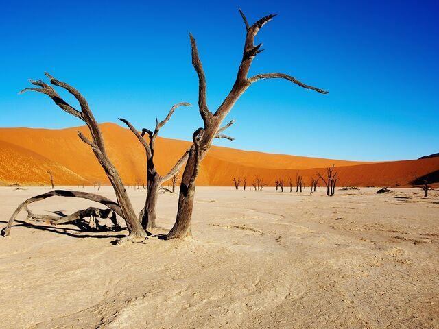 Deadvalei v namíbii