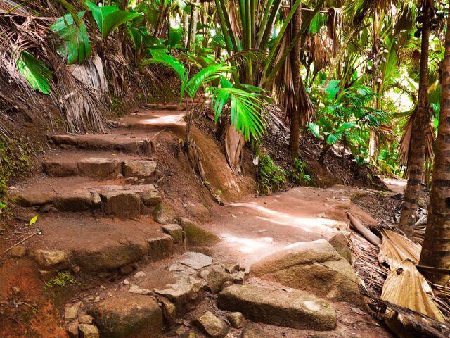 Džungla na seycheloch