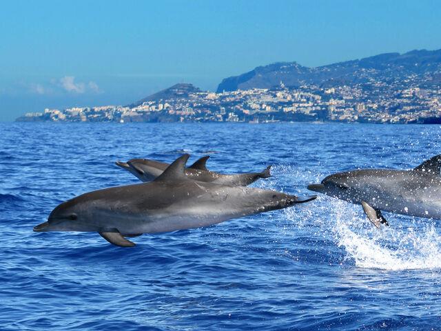 Delfíny na madeire