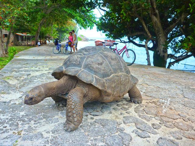 korytnačka na seycheloch
