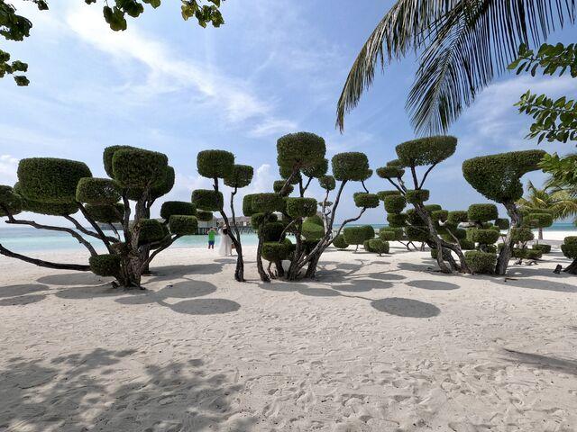 Kríky na pláži