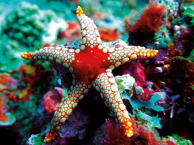 Podmorský svet na maldivy