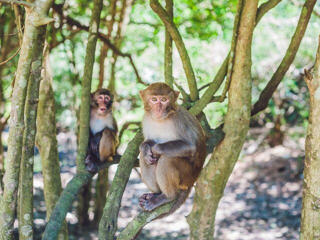 Opičky v národnom parku v paname