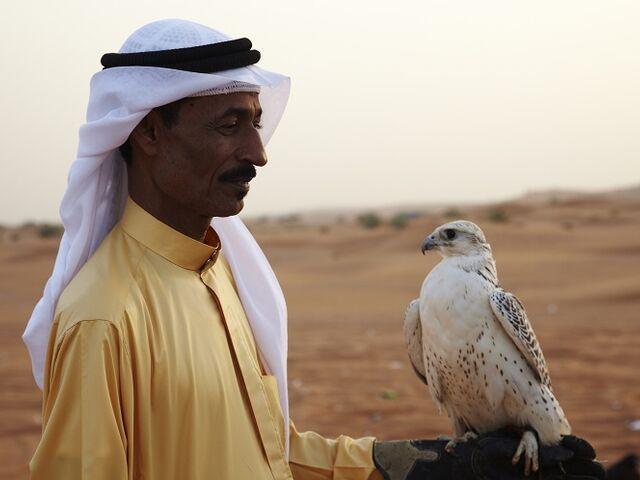 Falcon show v ras al khaimah