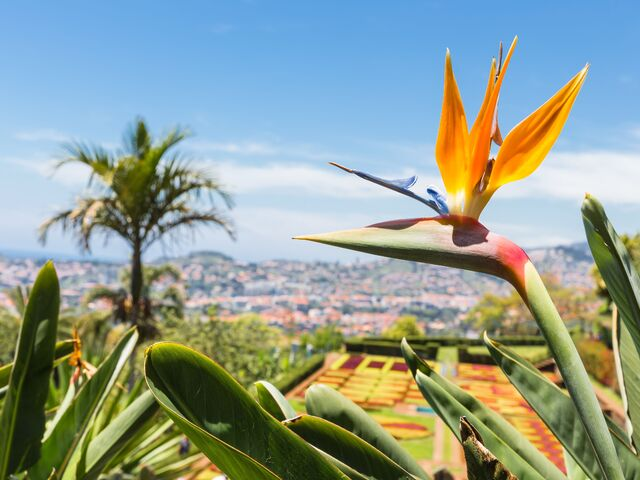 Kvety na madeire