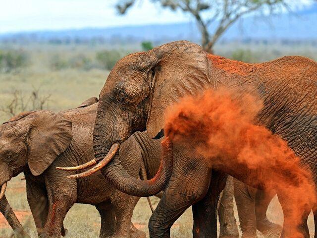 Slony v národnom parku v keni