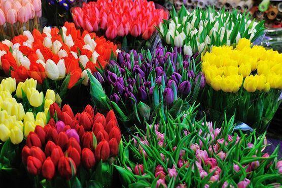 Kvetinový trh, Holandsko