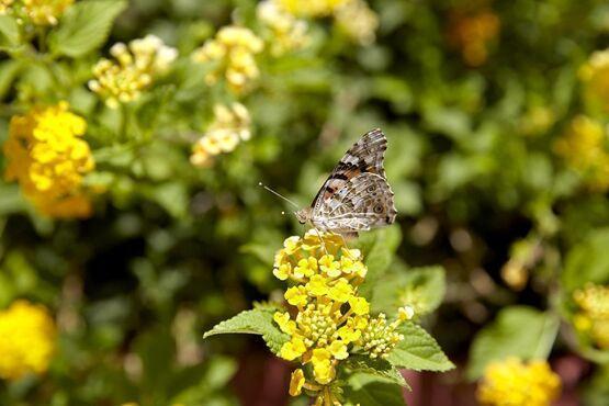 Údolie motýľov na rodose v grécku