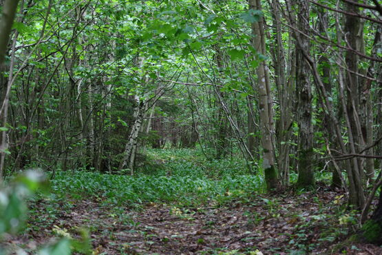 Prírodná rezervácia v estónsku
