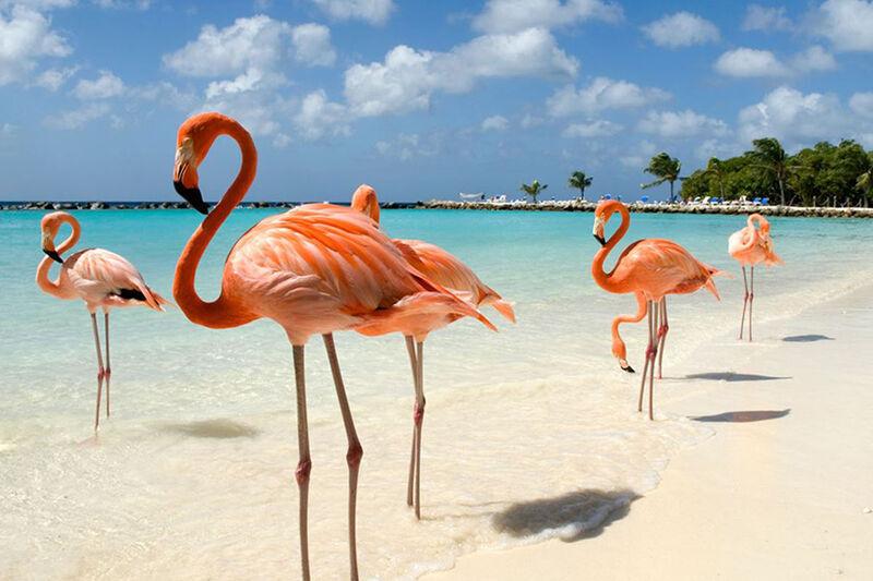 Plameniaky na pláži