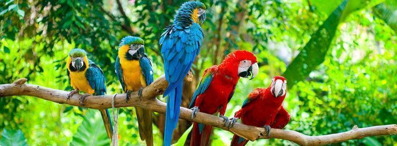 Papagáje v zoo v pafose