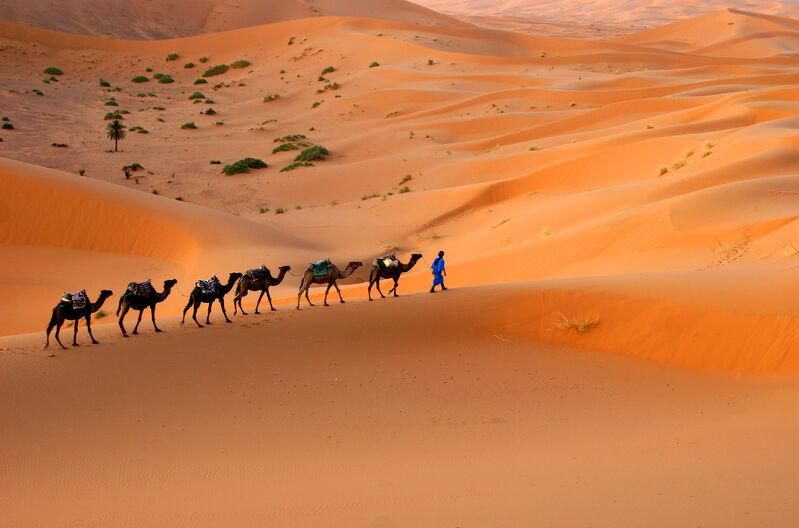 Ťavy na púšti