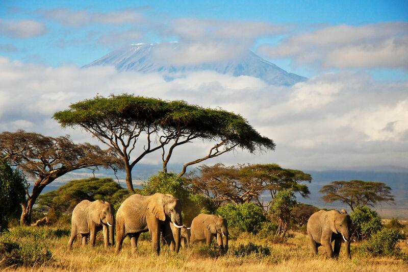 Slony a Kilimandžáro v pozadí