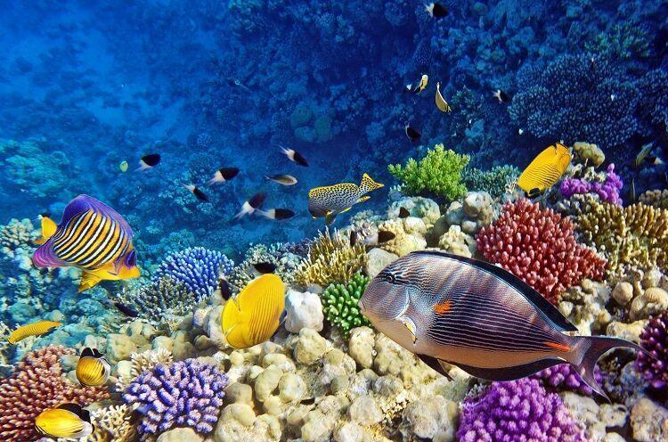 Podmorský svet v egypte
