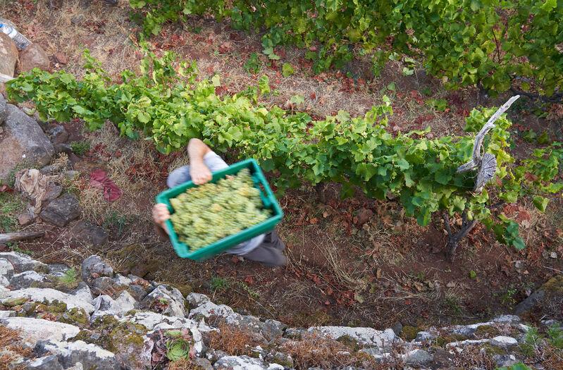 Víno na madeire