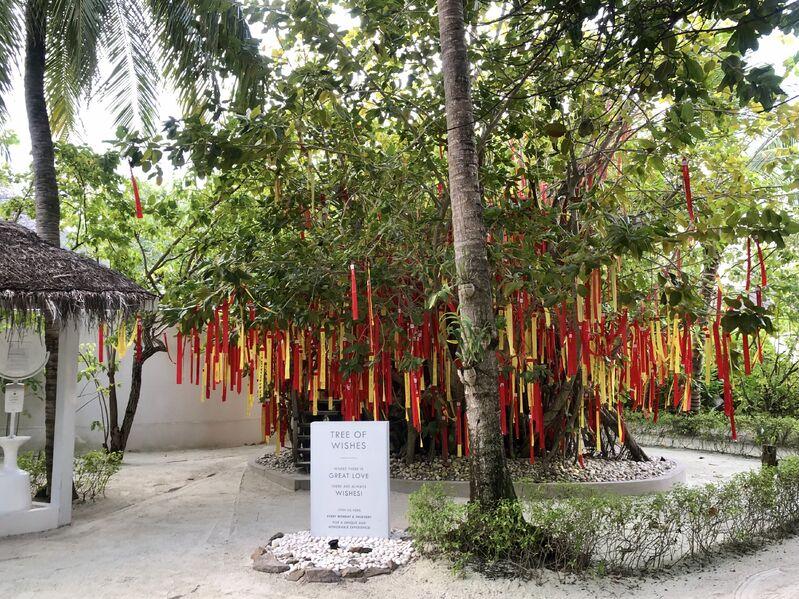 Strom želaní v rezorte