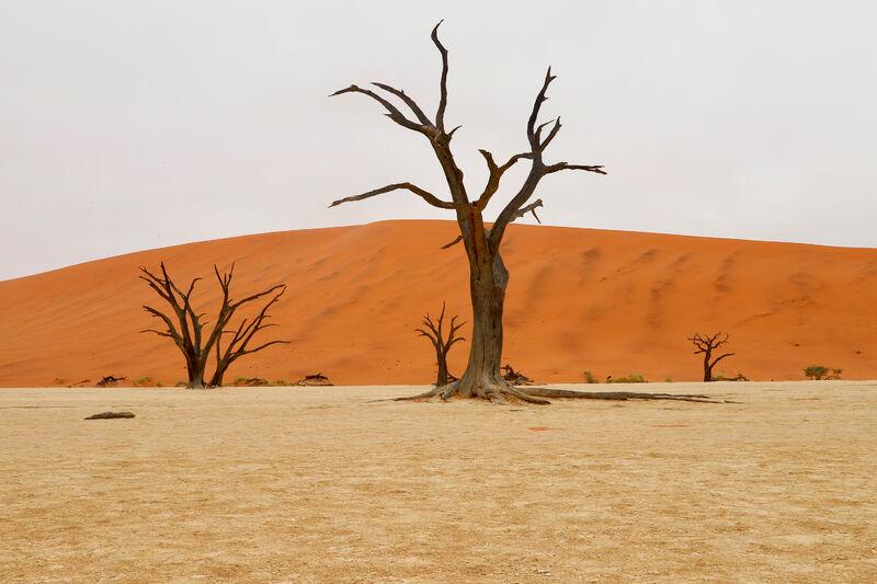 Púšť a suché stromy