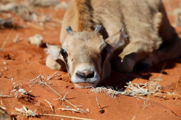 Zvieratá v namíbii