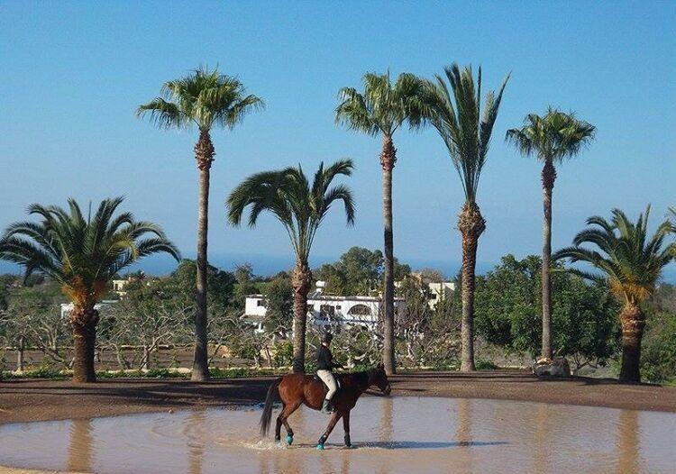 Jazda na koni v pafose na cypre