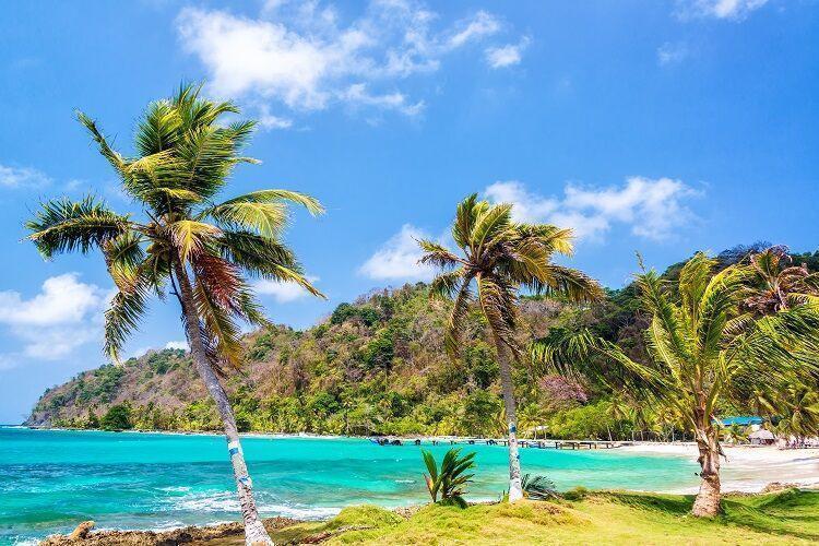 Palmy na pláži v paname