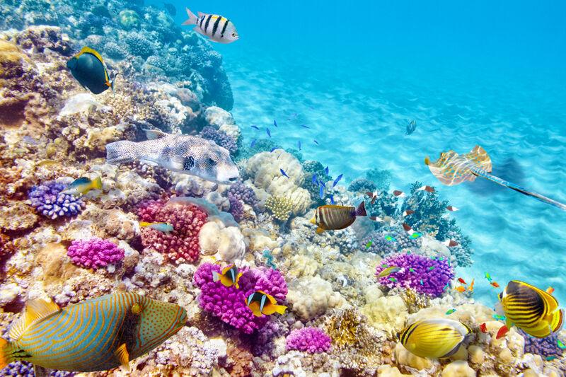 Koralový útes Mexiko