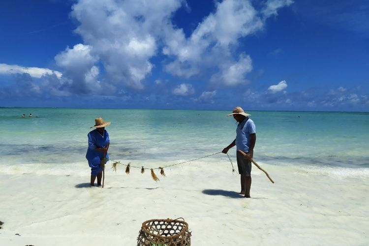 zber morskych rias na zanzibare