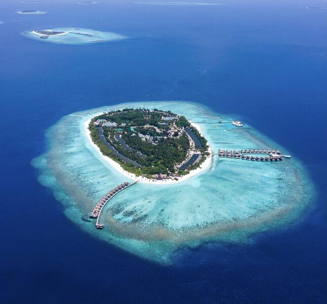 Maldivy zhora