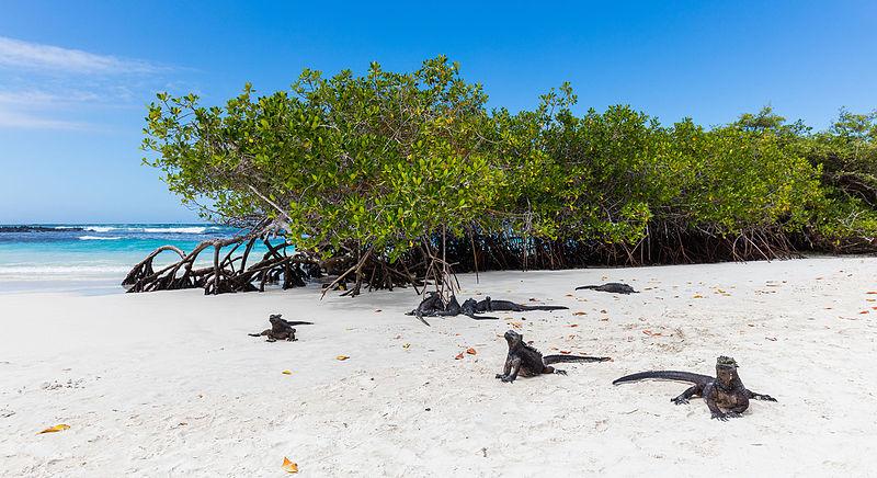 Tortuga Bay Beach na galapágoch v ekvádore