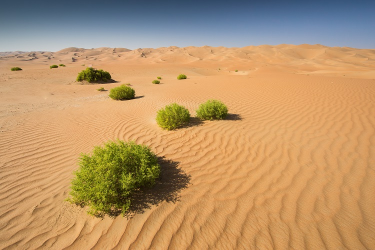 Púštne safari v abú dhabí