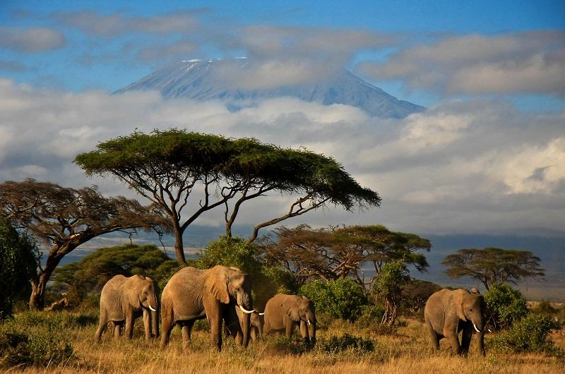 Národný park amboseli v keni