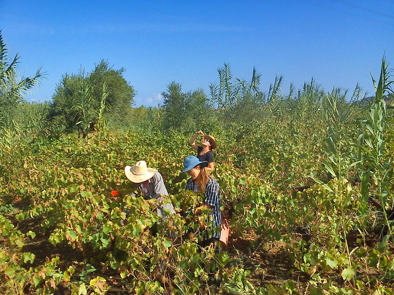 Farma Therianos na Zakyntose