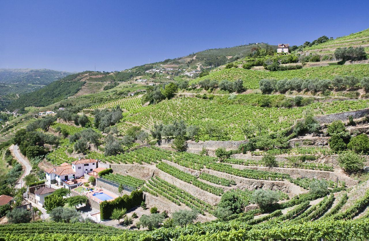 Vinice v údolí rieky douro v portugalsku