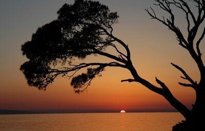 Západ slnka v popredí so stromom