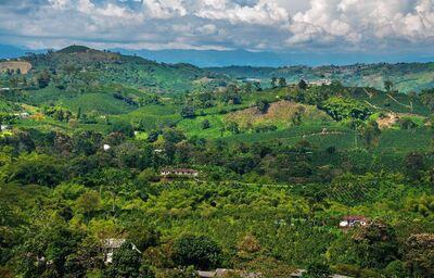 Krajina s plantážami kávy