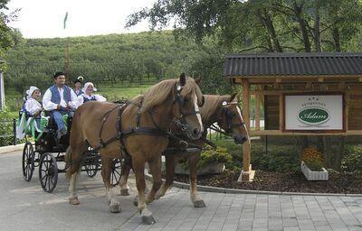 Koč s koňmi