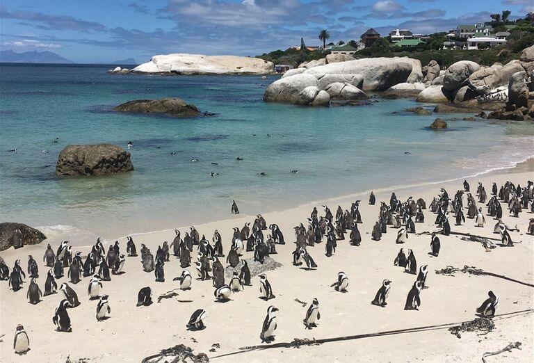 Kapské Mesto - tučniakx