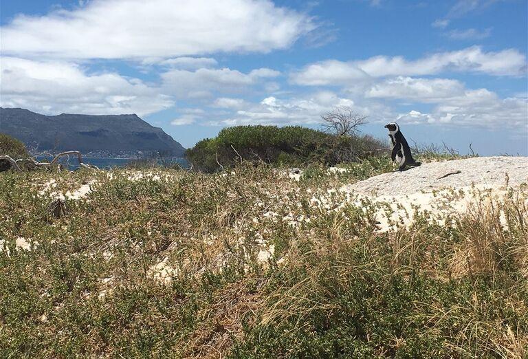 Kapské Mesto - pohľad na krajinu