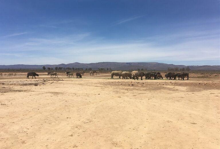 Kapské Mesto -  stádo slonov
