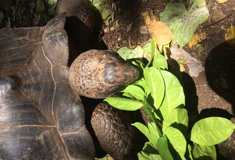 Suchozemská korytnačka Zanzibar - poznávanie afrického raja