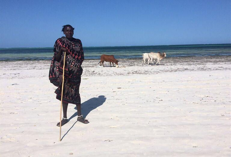 Pastier kráv na pláži Zanzibar - poznávanie afrického raja