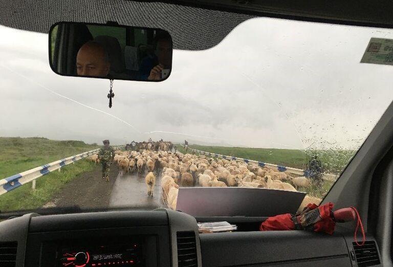 Za krásami Arménska- stádo oviec