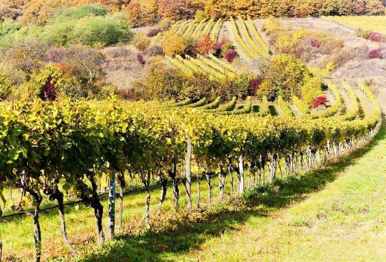 Panónska vinohradnícka oblasť, poznávací zájazd, Rakúsko