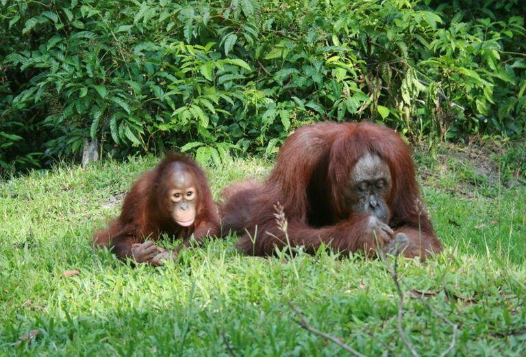 Mama opica s mláďatkom